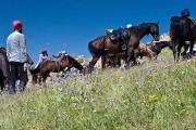 Конные прогулки в Кисловодске